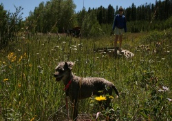 dog trail thru national forest in vail