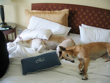 pet friendly hotels Vail