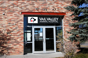 vet in vail, colorado